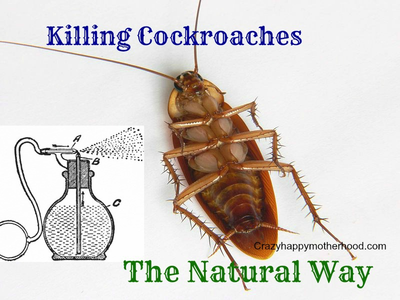 Killing Cockroaches the Natural Way | crazyhappymotherhood