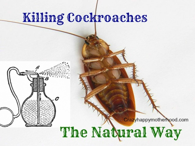 cockroaches2